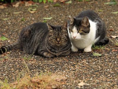 猫の保護、引き取り、一時預かり