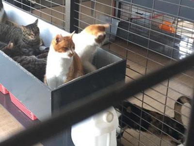 保護施設-猫色シッターハウス-について